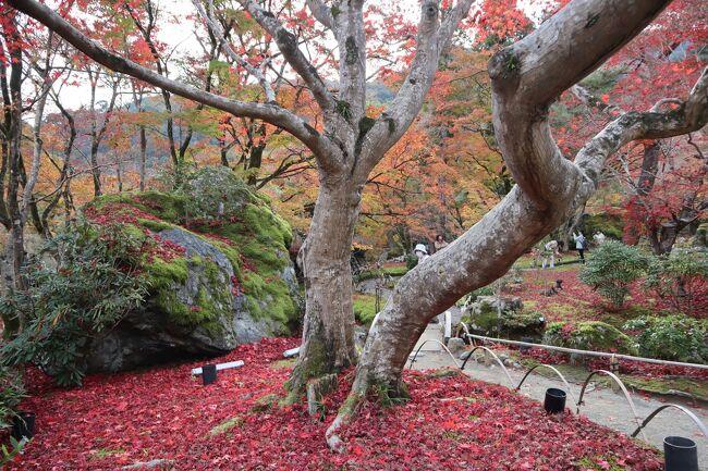 GOTOトラベル京都の旅・・紅葉が「獅子吼の庭」を埋め尽くす、特別公開の宝厳院を訪ねます。