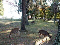 奈良公園を歩く