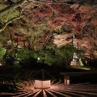 晩秋の京都ひとり旅「なごり紅葉」