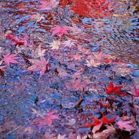 """雅の世界に心遊ばせて""""京都""""一人時々二人旅 Vol.3 今日は一人、豊かで風雅な嵐山の自然を愉しむ"""