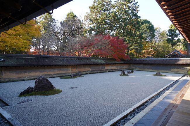 土曜日日曜日は、やっぱり大人しく過ごして、週明け月曜日。お出かけしましょうか。行き先は、前日に選定済み。とっくに終了と思っていた京都の紅葉ですが、思わぬところで見頃を迎えているとか。石庭の印象しか無かった龍安寺。この季節は、どんな風情なんやろね?