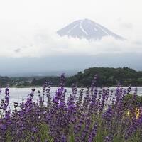 静岡~温泉と花とブルワリーの旅