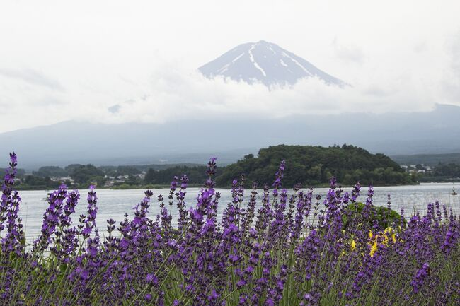 まだ寒さも厳しくない秋の週末、静岡の旅を楽しみました。旅のテーマは、花と温泉とグルメ。露天風呂付き客室の温泉や雄大な富士山を楽しみました。