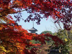 三渓園の紅葉と聘珍樓と日本大通りのイチョウ並木