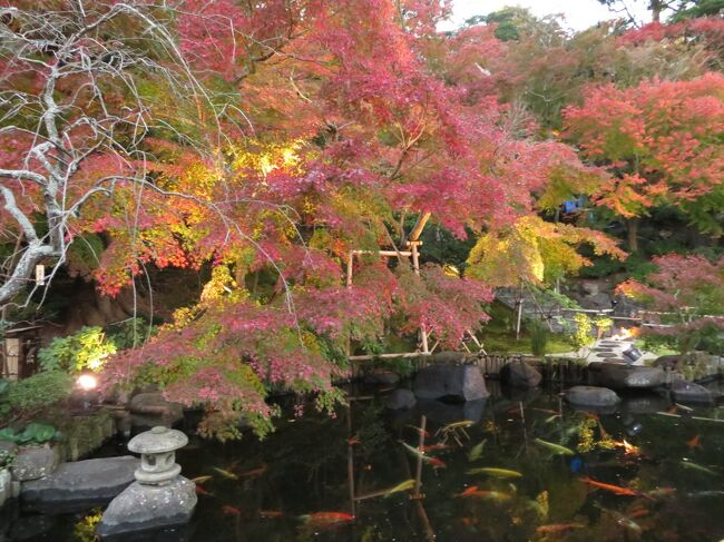紅葉を見に鎌倉観光。