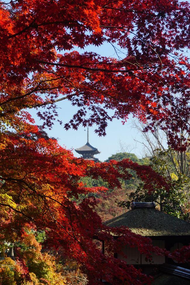 三渓園の紅葉を見てきました