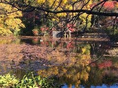 諦めていた紅葉の京都は凄かった! そして GOTO大阪