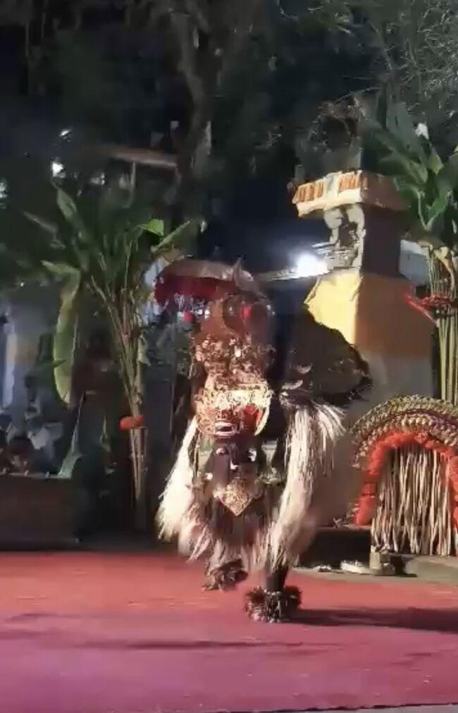 バロンブントゥッ<br /><br />バロンダンスは普通頭とお尻の部分とで2人の踊り手によって踊ります。<br /><br />こちらは1人で踊るバロン<br /><br />ブントゥッとはインドネシア語で尾を意味しますが、バロンブントゥッはしっぽのない踊りです<br /><br />お寺のオダランで踊られたものです。<br />