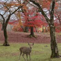 娘ふたりと初めての奈良へ1泊2日