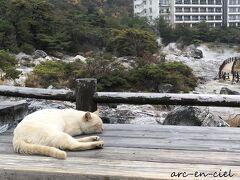 九州縦断☆温泉の旅☆雲仙温泉で猫との出逢い(2020)【1.前編】
