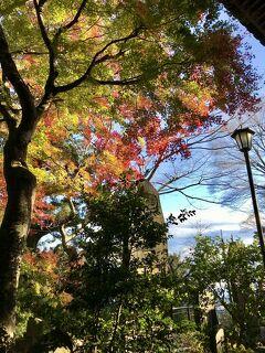 2020年11月 高尾山で紅葉狩り&ラ・ジェント・ホテル歌舞伎町でステイケーション☆