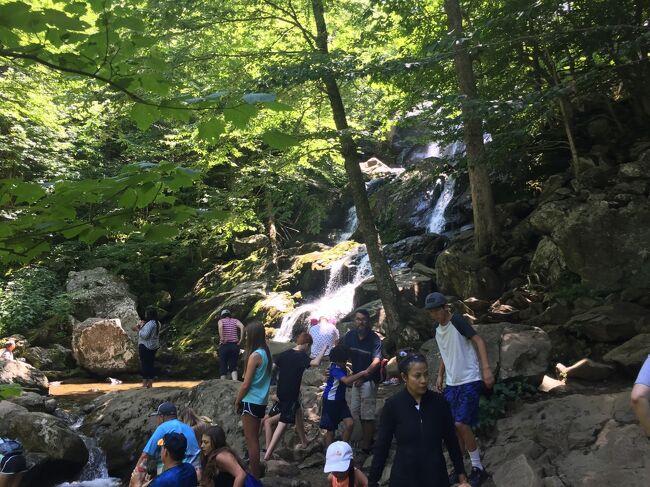 シェナンドー国立公園のアイコン的なスポットであるこの滝は、人気の地で多く人が訪れます。トレイルは坂道で体力を消耗しますが、滝の音やマイナスイオンに癒されに来た人で賑わっています。