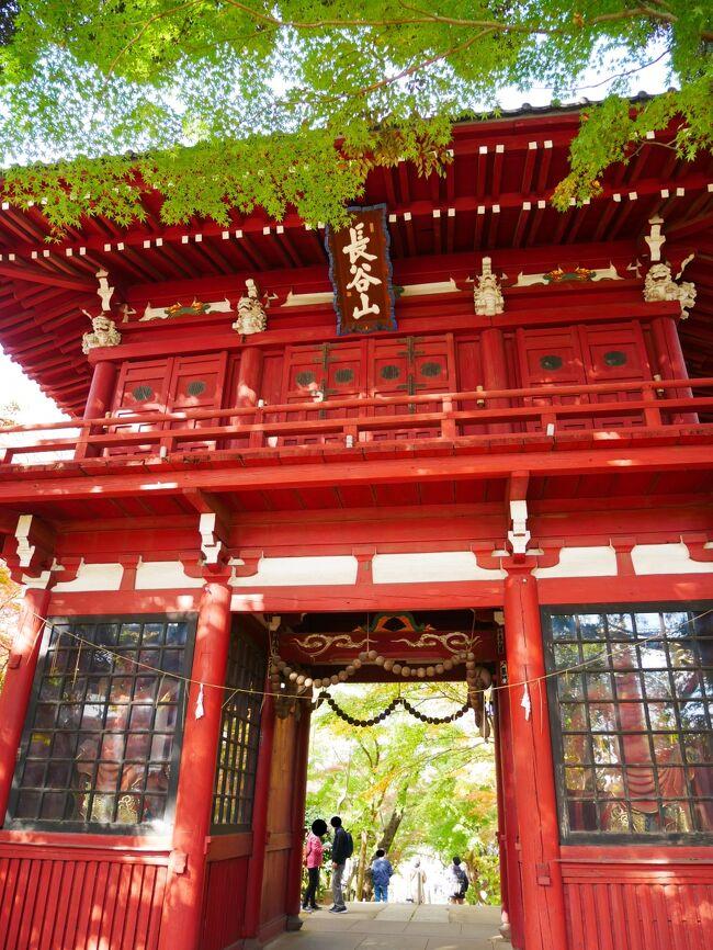 紅葉狩りをしたくて本土寺へ行ってきました。<br /><br />一部きれいに色づいている枝もあれば紅葉せずに枯れてしまっている枝もあり…といった状況で期待していたほどではありませんでした。<br />今年はこちらに限らず紅葉そのものがいまいちだったのかな。