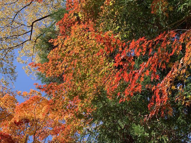 渋滞を避けて早朝軽井沢に紅葉見物に行きました。<br />時間かあったので小諸懐古園にも行ってみました。<br /><br /><br />