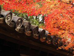 秋の京都で紅葉三昧 (1) 東福寺の紅葉と高台寺のライトアップ