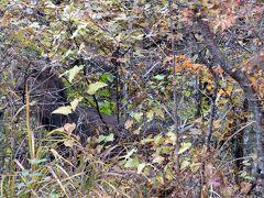 秋のエクシブ山中湖1泊 ラウンジドルチェの喫茶 エクシブ山中湖近くで鹿に遭遇 パノラマ台 山中湖~三島のドライブ