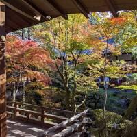 Go to キャンペーンで紅葉の京都へ