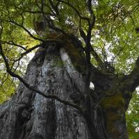 2020冬の屋久島 その2~紀元杉とヤクスギランド