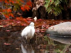 紅葉と野鳥観察@上野恩賜公園・日比谷公園・六義園 2020年12月の記録