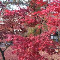 紅葉の京都を凝縮して観光②