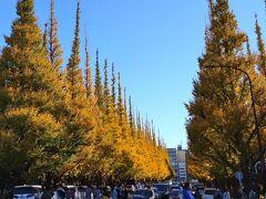2020/11 神宮外苑 銀杏並木