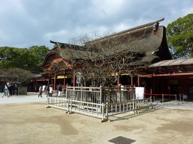 ANAコインが中途半端に残っていたので、福岡行きの航空券を差額を出して購入。9月に行く予定でしたが、台風10号の接近で飛行機が飛ばなくなったので、12月に変更しホテルも改めて予約。大宰府天満宮に一度は行ってみたく、調べていたら近くに竈門神社たる名の神社を見つけ、もしや竈門炭治郎の名の由来はここから?大宰府天満宮のすぐ裏手にあるように地図に描かれていたので、行ってみたものの、わざわざ険しい道を行くことになり、苦労しましたが、到着してみて立派な神社であったことと、お参りした後に寄ったカフェレストランで食べたハンバーグが美味しかったので、苦労した甲斐はあったかと思いました。<br />美味しい明太子、博多ラーメン、1泊ではちょっと物足りなさを感じ、また違う季節に来れればいいなと思える旅でした。<br />