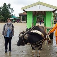 国境の東、Go toとGo toのはざまと低気圧と低気圧の谷間の八重山諸島の旅(7)高速船で西表島から水牛車に乗って由布島観光。