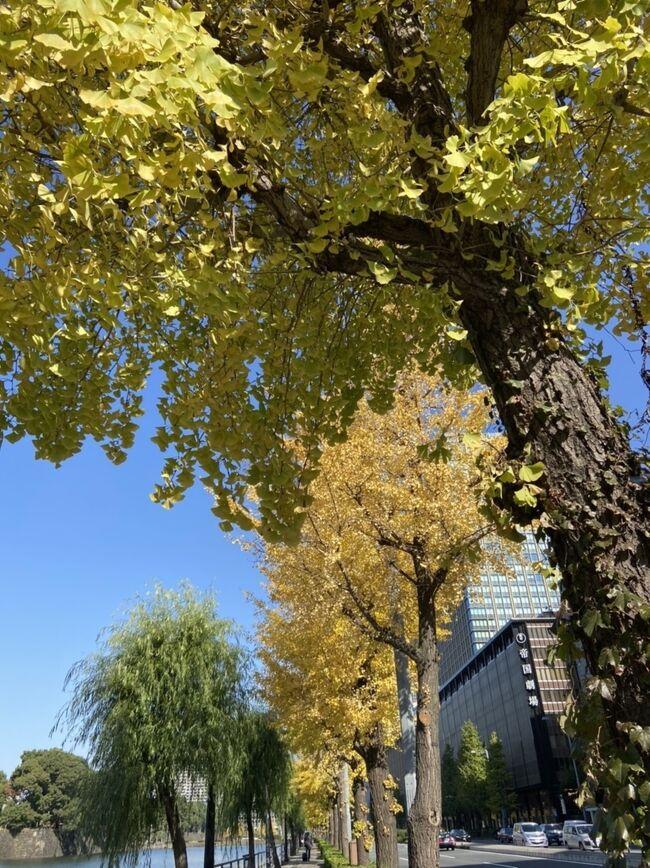 久しぶりに皇居前広場を散歩しました。<br />旅先で綺麗な公園などを見ると、いいなぁこんな所をいつでも散歩できて。と思っていたのですが、東京にも沢山散歩できる所がある事を改めて認識しました。<br />こんな時期なので、都内の庭園や公園巡りをしてみるのも良いかもと思った次第です。