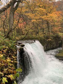 2020秋の青森旅行その6 紅葉狩りのはずが…大雨の奥入瀬渓流観光に!これは何の修行なの(T-T)