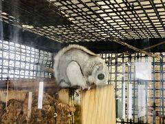 動物にもおめでとう。雪の円山動物園と北海道神宮初詣