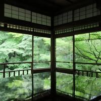 仔猫といっしょ計画(京都総決算2020 瑠璃光院他)