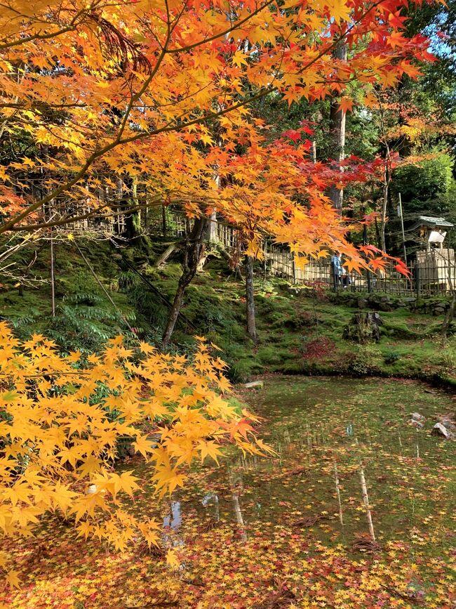 湖国の紅葉を巡る旅1 彦根と西明寺