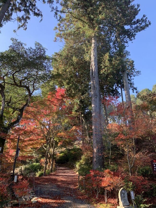 湖国の紅葉を巡る旅3 琵琶湖マリオットホテルと湖南三山常楽寺