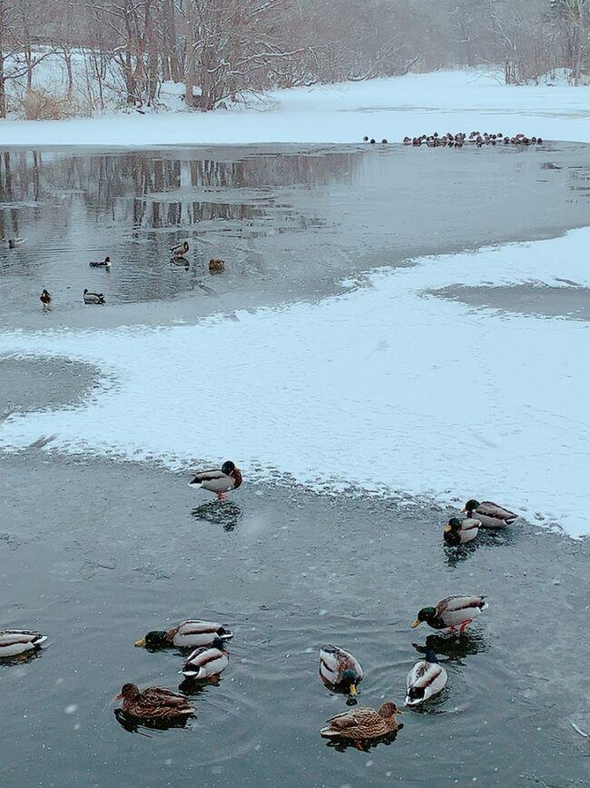 年末年始は国内旅行10泊11日-南から北を攻める旅- No.4 初の北海道新幹線乗車! 2ヶ月ぶりの北海道は雪で一変してた~!