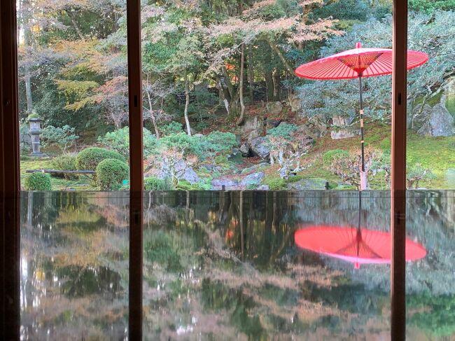 湖国の紅葉を巡る旅です、この日の午後は近江八幡の散策とフリータイムを過ごして大津の琵琶湖ホテルへ入ります。<br /><br />近江八幡の散策中に古民家レストランでランチを食べたのですが、写真を撮ったはずなのに無くしてしまった様です・゜・(ノД`)・゜・<br /><br />そして翌日の朝、旧竹林院でお抹茶を頂きましたヽ(´▽`)/