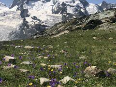 スイス花とハイキングの旅 ゴルナーグラート リッフェルアルプ