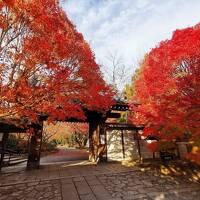 京都家族旅