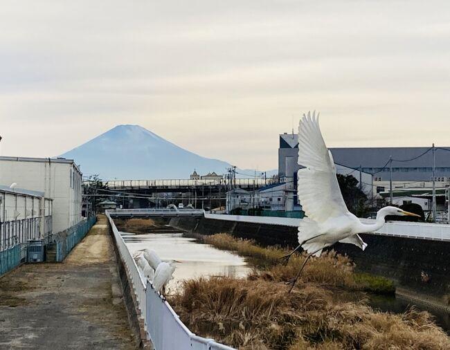 座敷わらしのいる鶴嶺八幡宮は茅ケ崎市、初詣で有名な鶴岡八幡宮は鎌倉市、嶺と岡の違いで知名度が全く違いますね。<br />午後からバイクで山に向かおうと思いましたが、曇天で寒かったのでウォーキングに変えました。<br />近所の左富士通りから富士山を撮りました。<br />左富士の浮世絵は、歌川広重の五十三次名所図会「南湖の松原左富士」で有名です。東海道を歩いていて左側に富士山が見えるポイントです。<br />そして弁慶塚、源頼朝が落馬して亡くなった付近、ここは中川さんの敷地内にお邪魔しますが、市の職員に尋ねたところ勝手に入って良いそうです。<br />残念ながら、鶴嶺八幡宮では座敷わらしには出会えませんでした。なんてね(笑)