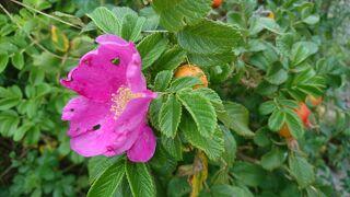 網走で6泊7日の過ごし方・5日目午前は花に野鳥に大自然を満喫。