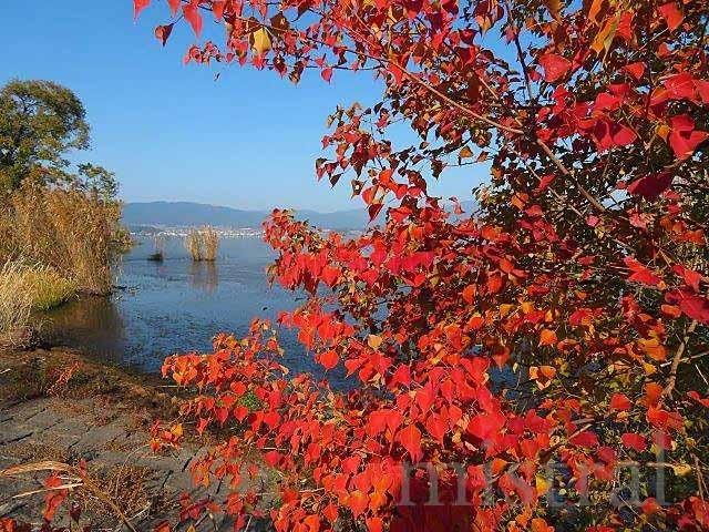 """毎年9月になると、サケの遡上を見るため北海道に行っていた…… のだけど、コロナの影響で2020年は自粛。<br />しかし、続けていたことが急に途切れると、やっぱり""""サケ見たい!!""""となってしまう。<br /><br />そんな時、琵琶湖博物館のFacebookで産卵遡上したビワマスが展示されていることがアナウンスされたのを見た。<br />婚姻色に染まった綺麗な魚体。<br />サケ成分が大いに不足していたこともあって、即座に""""見たい!!""""<br /><br />時期が時期ということを抜きにしても、もとより琵琶湖博物館くらいなら日帰りの距離である。<br />しかし、GoToキャンペーンの効果で、往復の新幹線+宿泊の合計代金が新幹線往復だけの金額より7000円くらい安い。<br />だったら泊まろうかと、前泊で琵琶湖博物館まで行ってきた。<br />天気にも恵まれ、美味しいものも食べられたりと、結果的に贅沢な水族館紀行となった。"""