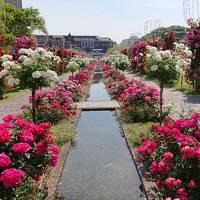 ハウステンボスのバラ祭りに行きました