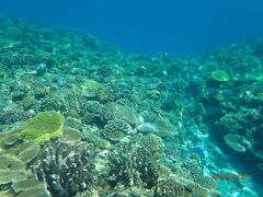 沖縄のゴリラチョップと水納島と私