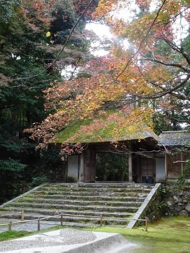 2020年11月末に行ったGoToトラベル京都旅行です。<br /><br /><2日目><br />この日は歩いて秋をしみじみ感じるつもりでした。しかし大量の紅葉に目がくらんでただの紅葉狩りになってしまった。<br /><br />京都凄い、紅葉が似合いすぎる。<br /><br />そして「行けるとこまで行く」つもりで計画にいろいろ詰め込んだところ、前日からの疲れがきて途中で力尽きました。でも楽しかったです。<br /><br />日程<br />・銀閣寺~法然院~真如堂を歩く<br />・吉田山のあたりで昼ご飯<br />・重森三玲庭園美術館<br /> ※これ以外にも寄り道しています