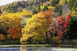 ◆錦秋の裏磐梯~猫魔・細野・黄金平・静寂の紅葉