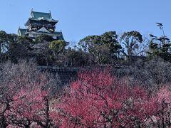 天気がいい日に大阪城梅林で梅観賞