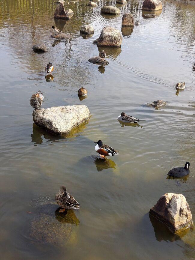 ディスカバリーご近所 25年ぶりくらいに昆陽池行ってきました(^-^)