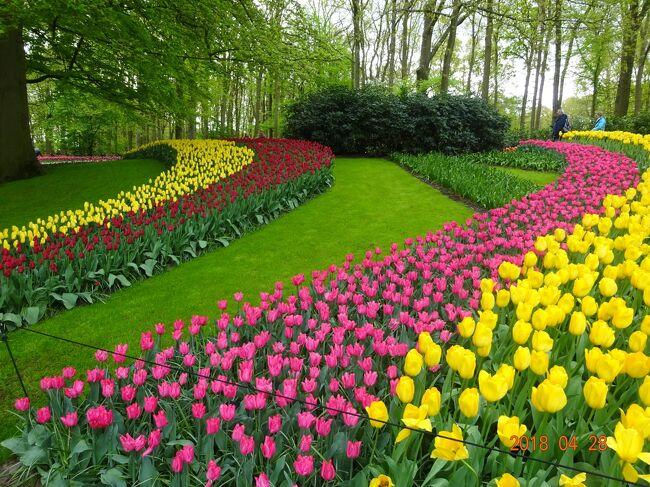 """アムステルダムではマリオットホテルに3泊しながら、キューケンホフ公園で連れ合いの念願のチューリップの花の鑑賞をする事が出来ました。<br /> また国立美術館で、レンブラントの""""夜警""""を鑑賞する事も出来ました。<br /> 今回の旅は名画に触れる事の出来る旅でしたので、ゆっくりと鑑賞できたことが他の観光旅行とは違う楽しみでもありました。<br /> 帰路も現地解散でしたが、ツアーの皆と一緒のJALにて成田まで帰ってくることが出来ました。"""