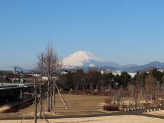 花菜ガーデン&中井中央公園で富士山を楽しむ!