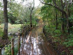 箱根湿生花園、大涌谷、山梨西沢渓谷トレッキング、笛吹川フルーツ公園を巡る(その1)