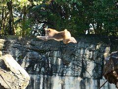 オジサンひとり、平日の動物園に行く ~よこはま動物園ズーラシア~